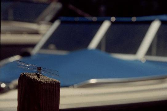 Dragonfly vs. Speedboat